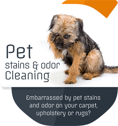 Pet Stains & Odor Removal